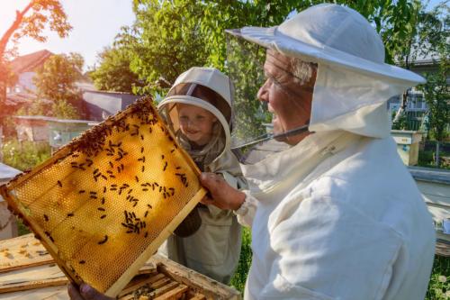 澳洲优思益黄盒子蜂蜜为何在众多国产蜂蜜中脱颖而出?